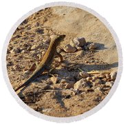 Schreiber's Fringe-fingered Lizard Round Beach Towel