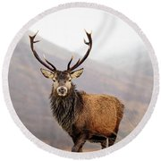 Scottish Red Deer Stag - Glencoe Round Beach Towel