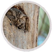 Screech Owl In A Tree Round Beach Towel