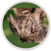 Screech Owl In Flight Round Beach Towel
