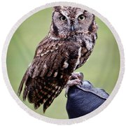 Screech Owl Perched Round Beach Towel by Athena Mckinzie