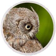 Screech Owl Portrait Round Beach Towel