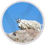 Scruffy Mountain Goat On The Mount Massive Summit Round Beach Towel