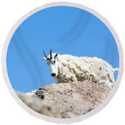 Scruffy Mountain Goat On The Mount Massive Summit Round Beach Towel
