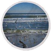 Sea Birds Feeding On Florida Coast Dsc00473_16 Round Beach Towel