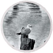 Sea Gull Black And White Round Beach Towel