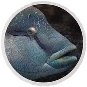 Sea Life 19 Round Beach Towel