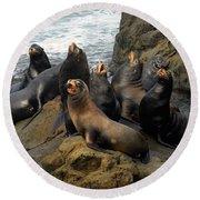 Sea Lion Chorus Round Beach Towel