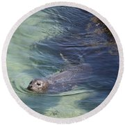Sea Lion In Clear Blue Waters Round Beach Towel
