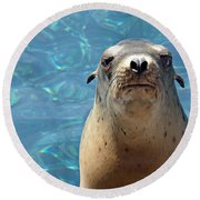 Sea Lion Or Seal Round Beach Towel