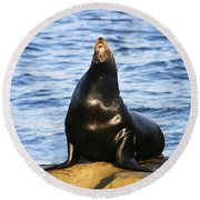 Sea Lion Sing Round Beach Towel