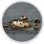 Sea Lions And Birds Round Beach Towel