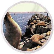 Sea Lions On Rock Pier Round Beach Towel