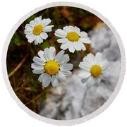 Sea Mayweed Round Beach Towel
