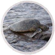 Sea Turtle On Rock Round Beach Towel