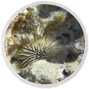 Sea Urchin Round Beach Towel
