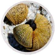 Sea Urchin Puzzle Pieces Round Beach Towel