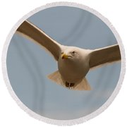 Seabird Closeup 01 Round Beach Towel