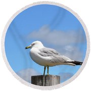 Seagull Beach Art - Sitting Pretty - Sharon Cummings Round Beach Towel
