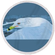 Seagull Departing Close-up Round Beach Towel