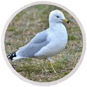 Seagull In Field Round Beach Towel