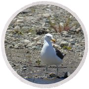 Seagull In Patagonia Round Beach Towel