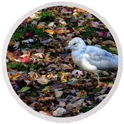 Seagull In The Fallen Leaves Round Beach Towel