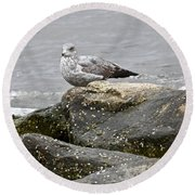 Seagull Sitting On Jetty Round Beach Towel