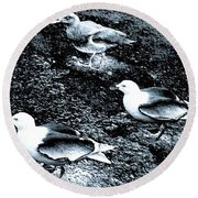 Seagull Trio Round Beach Towel