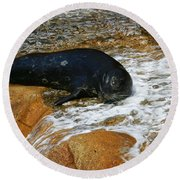 Seal Round Beach Towel