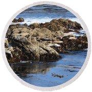 Seal Island Round Beach Towel