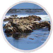 Seal Island Round Beach Towel