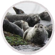 Seal Rock Round Beach Towel