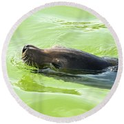 Seal Round Beach Towel