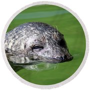 Seal Swimming Portrait Wildlife Scene Round Beach Towel