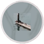 Seals At Oceanside Round Beach Towel by Laurie Lundquist