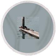 Seals At Oceanside Round Beach Towel