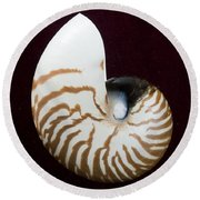 Seashell On Black Background Round Beach Towel