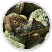 Seaside Ground Squirrel Round Beach Towel