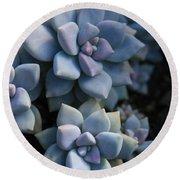 Sedum Clavatum Beautiful Cultivated Stonecrop Round Beach Towel