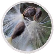 Seeds Ready For Take Off Round Beach Towel