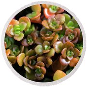 Seeing Succulents Round Beach Towel