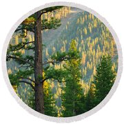 Seeing The Forest Through The Tree Round Beach Towel