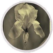Sepia Iris  Round Beach Towel