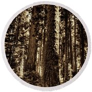 Sequoia Grove Along Crescent Meadow Loop Round Beach Towel