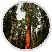 Sequoia In Kings Canyon Round Beach Towel