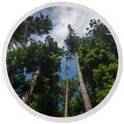 Sequoia Park Redwoods Reaching To The Sky Round Beach Towel
