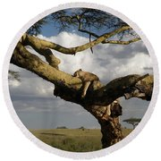 Serengeti Dreams Round Beach Towel