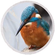 Serious Kingfisher Round Beach Towel