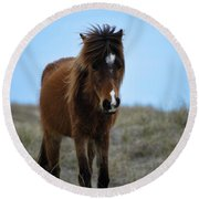 Shackleford Banks Pony Round Beach Towel
